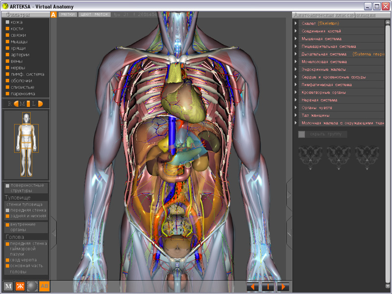 Виртуальная Анатомия 4.0