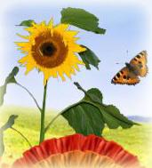 Шаблоны фотоколлажей Природа