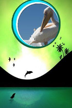 Шаблоны рамок В мире животных