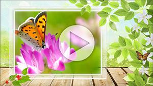 Шаблоны слайдов Летнее слайд-шоу от Allsoft